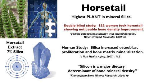 HOrsetail-Slide